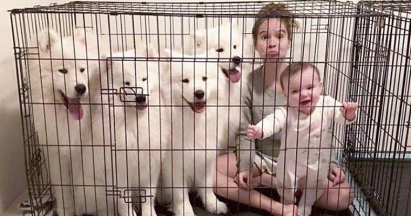 Peki, Köpeklere Ne Olacaktı?