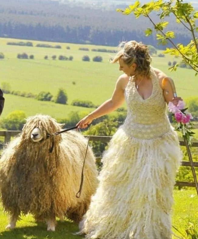 Braut Im Schafspelz