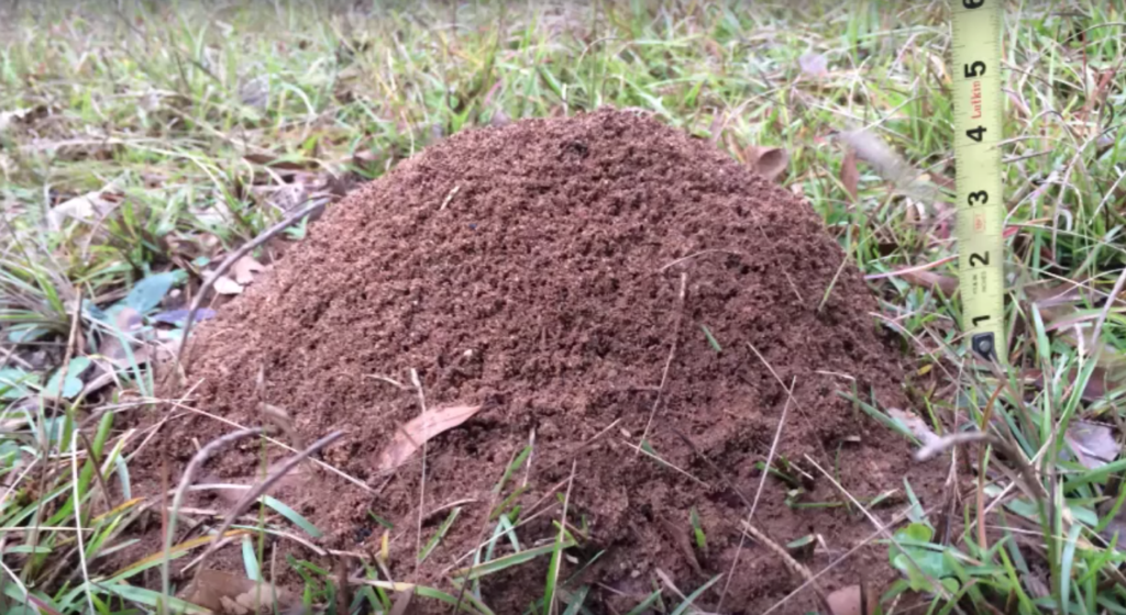 Molten Aluminum Into An Ant Nest