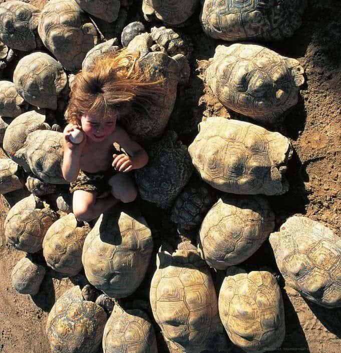 Kaplumbağalardan Öğrenme