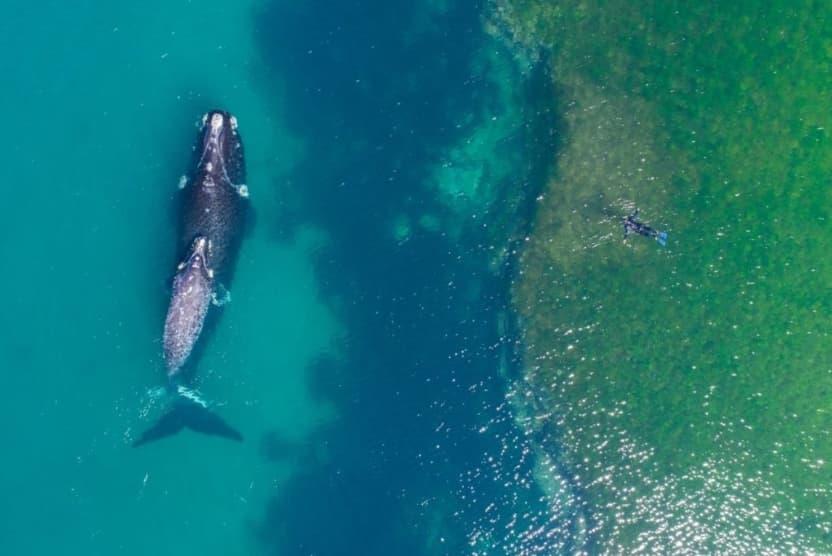 혹등고래와 스노클러