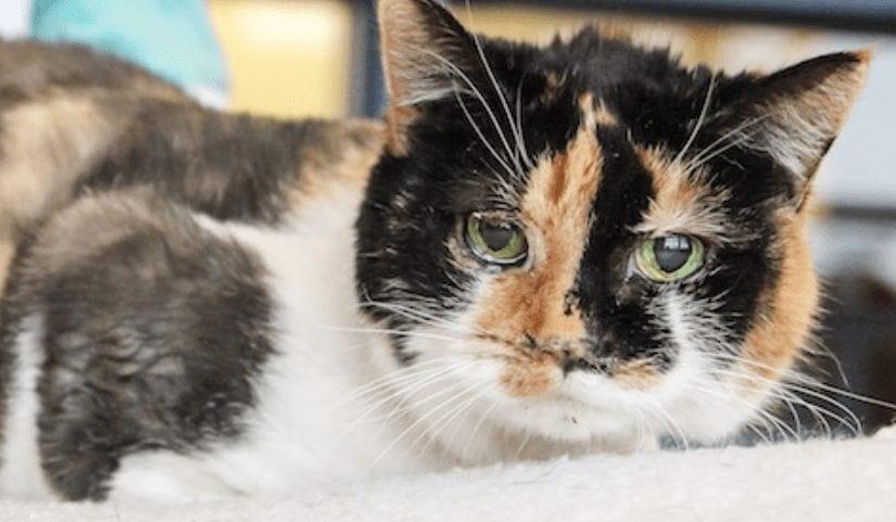 이 고양이를 보고 놀란 의료진