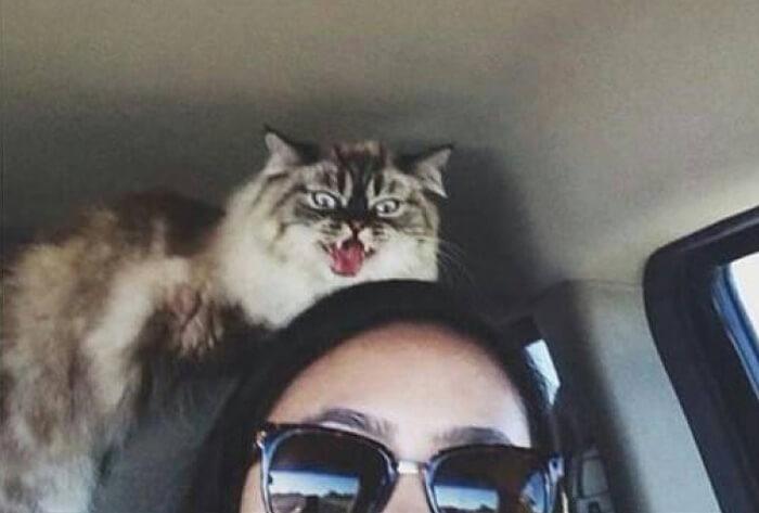 Cat Going Psycho