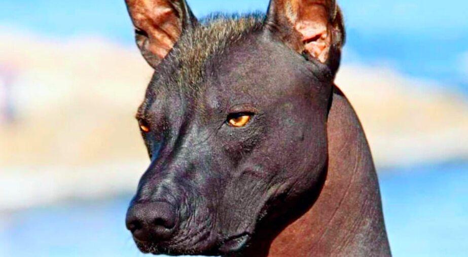 Hond Geadopteerd