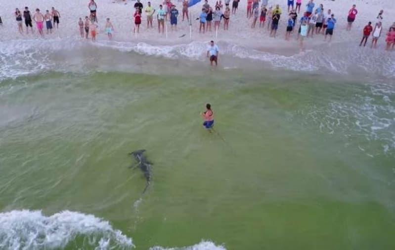 Panama Şehrinin Yakınlarındaki Çekiç Köpekbalığı