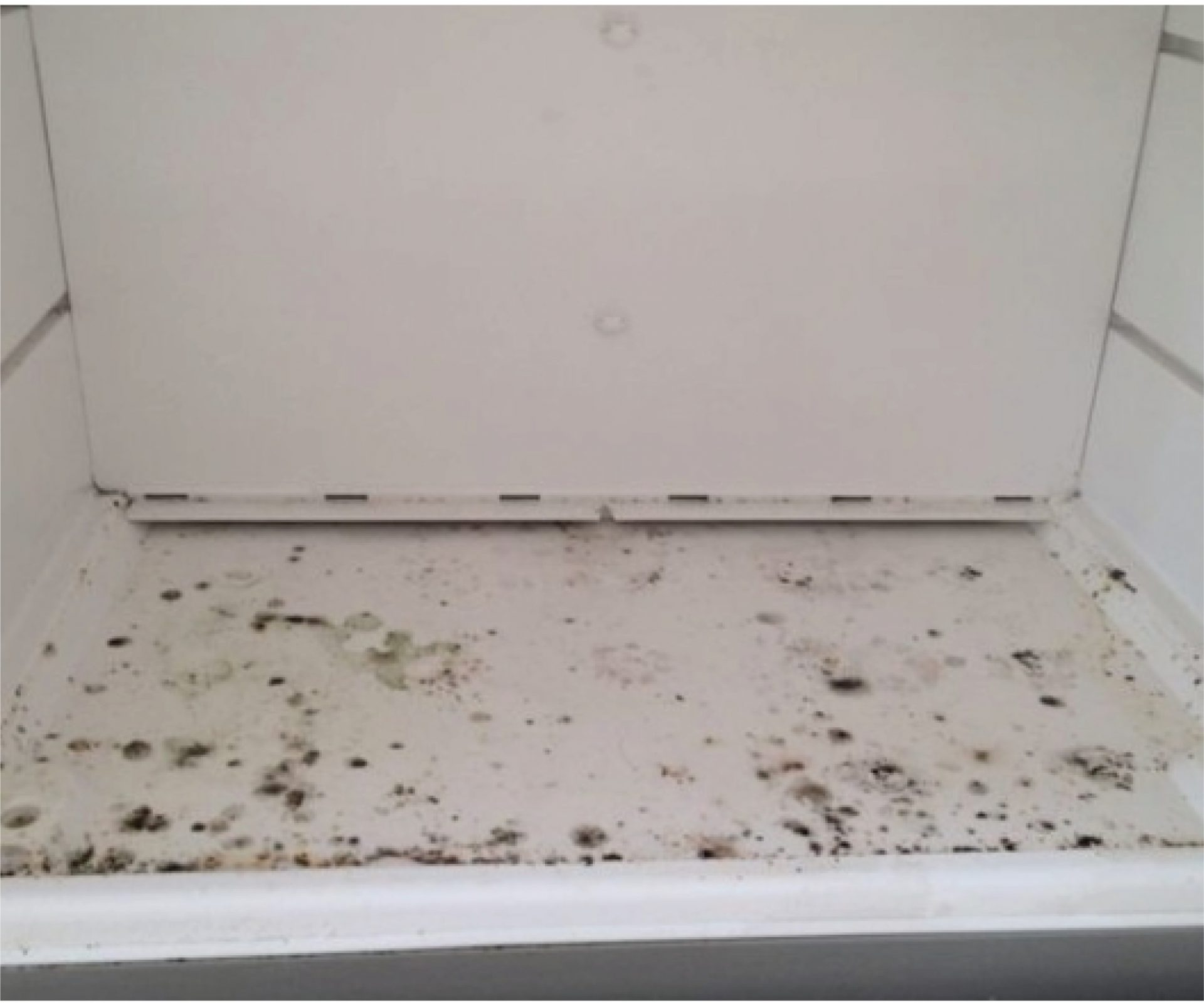 4 Remove Mold From Your Refrigerator