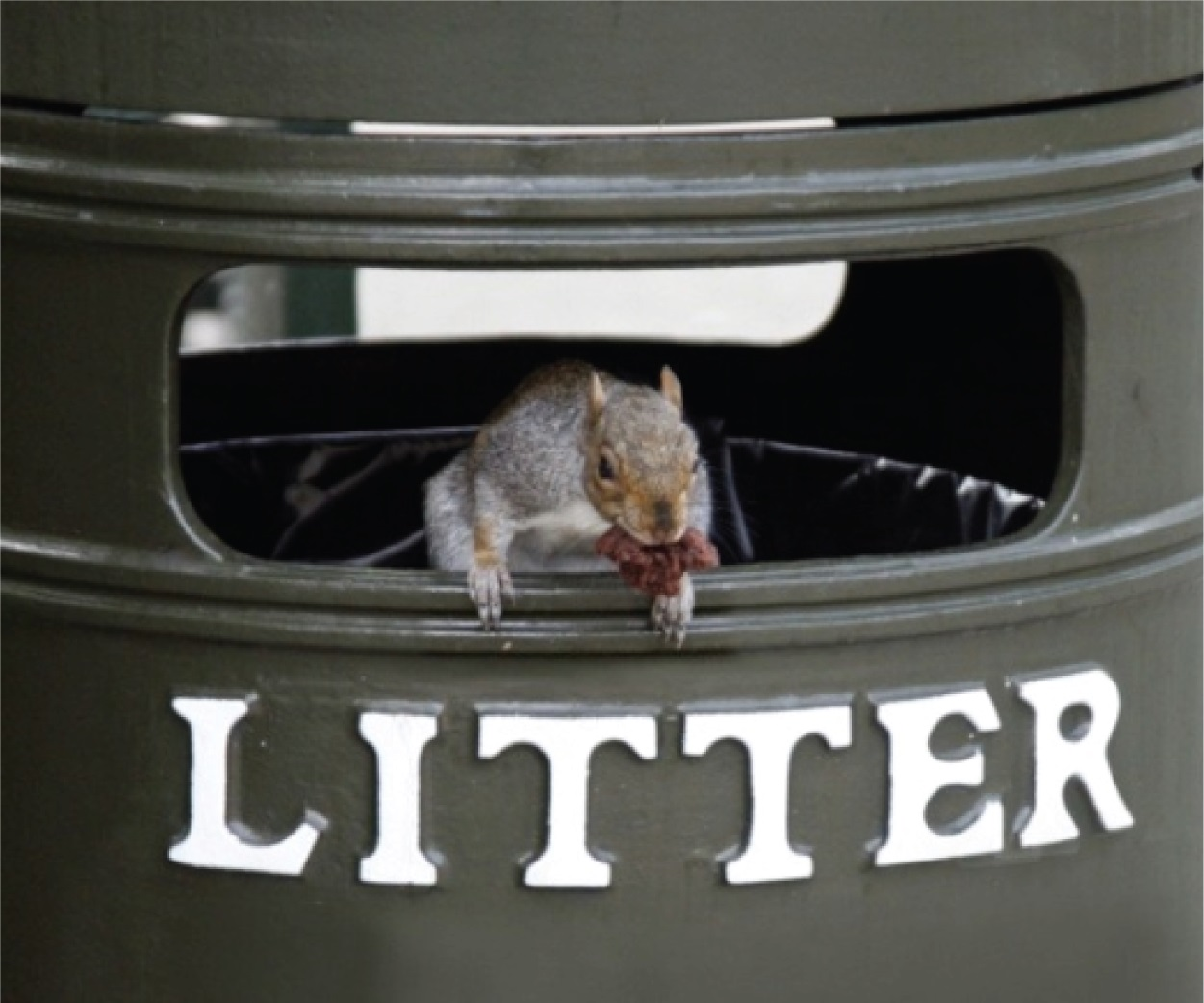 26 Keep Animals Out Of Your Trash