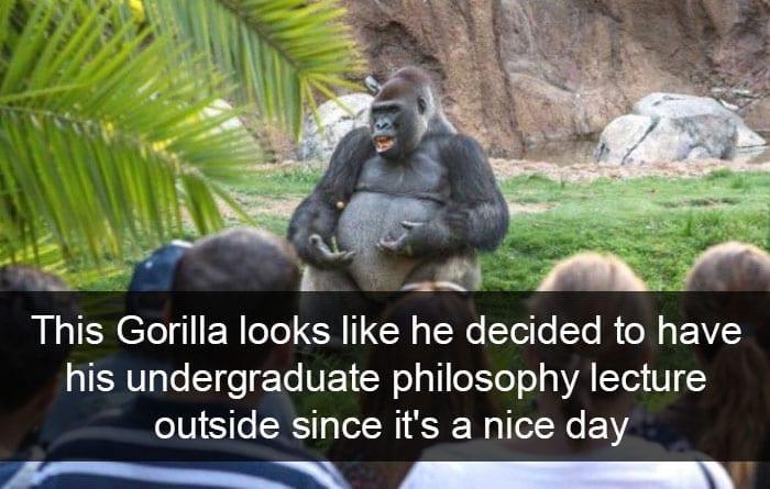 Gorilla Delivering A Speech