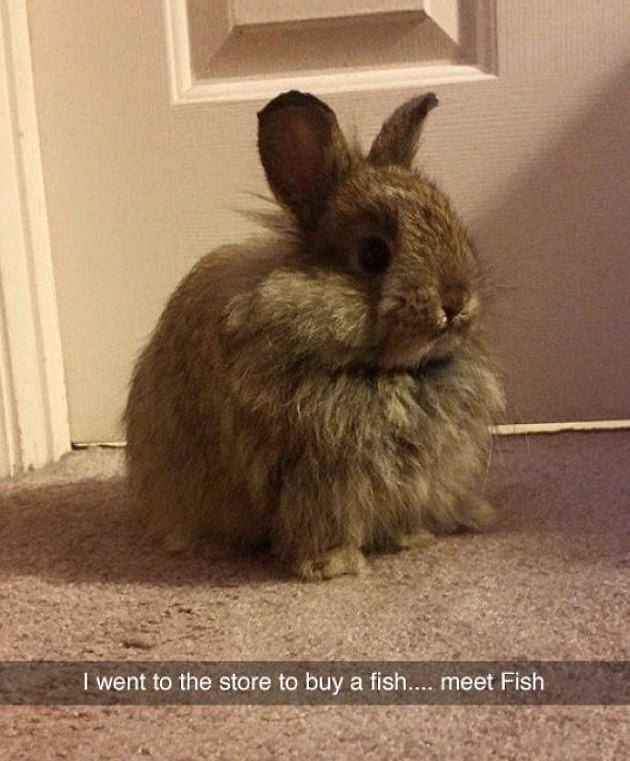 A Bunny Called Fish