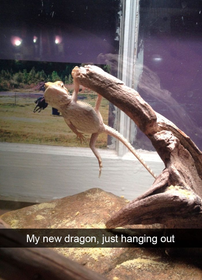 Just Hanging Out
