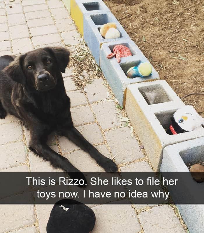One Organized Pooch