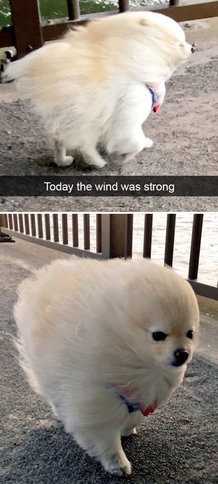 Just A Little Wind