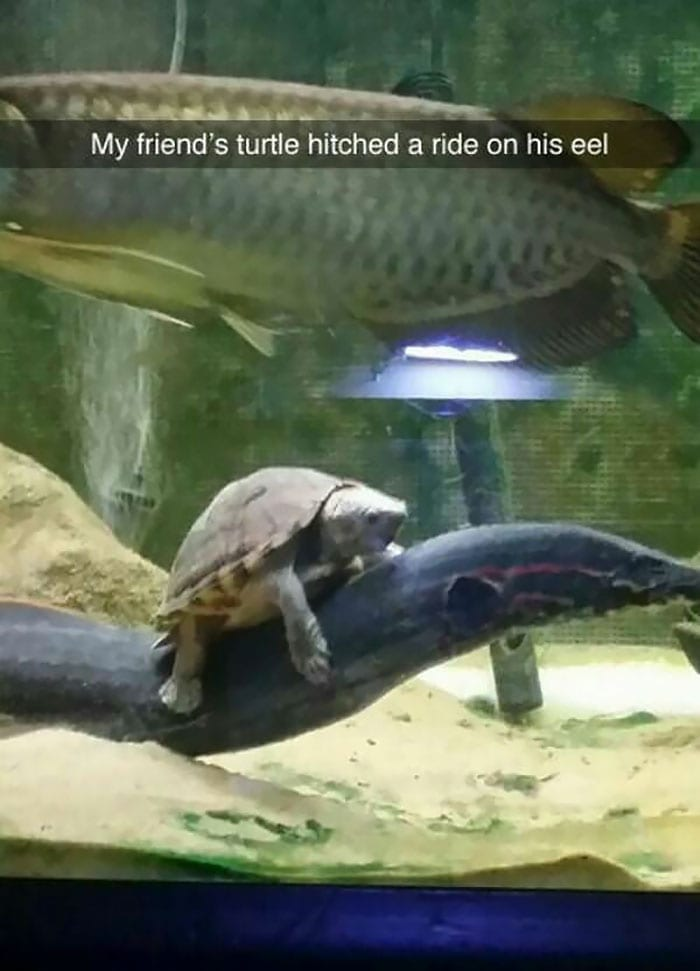 Riding The Eel