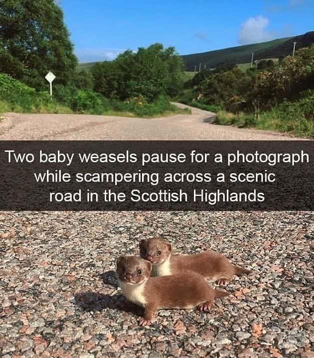 Pose For The Cameras