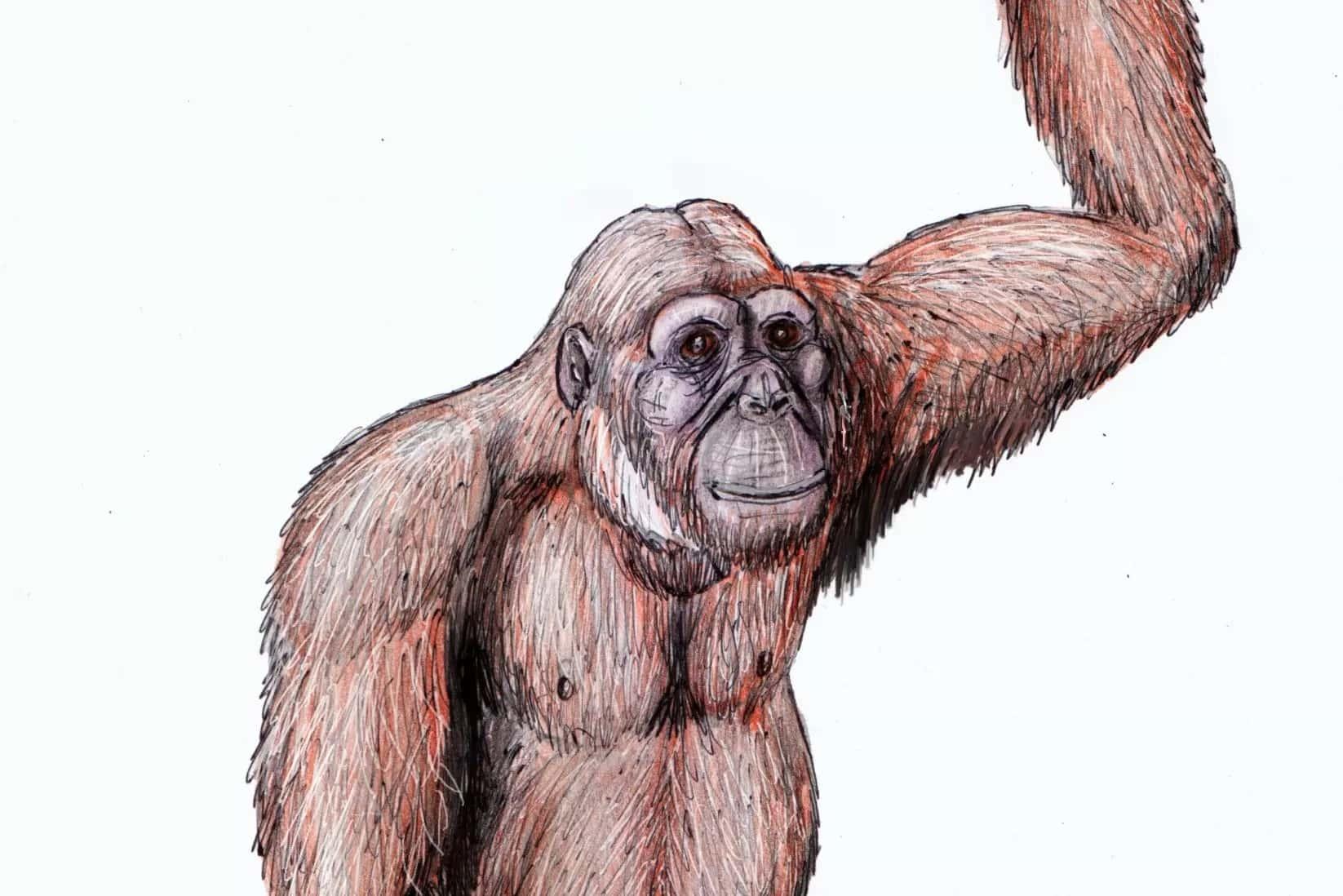 Os Humanos Vem De Macacos