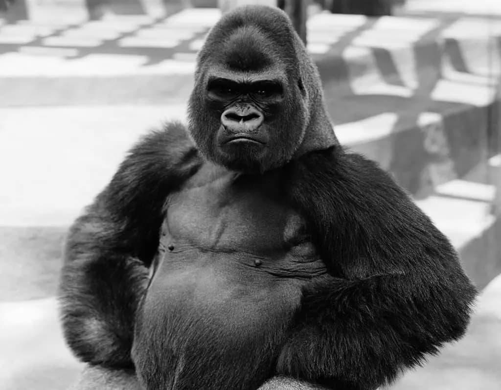 Humanos E Macacos Tem O Mesmo Ancestral