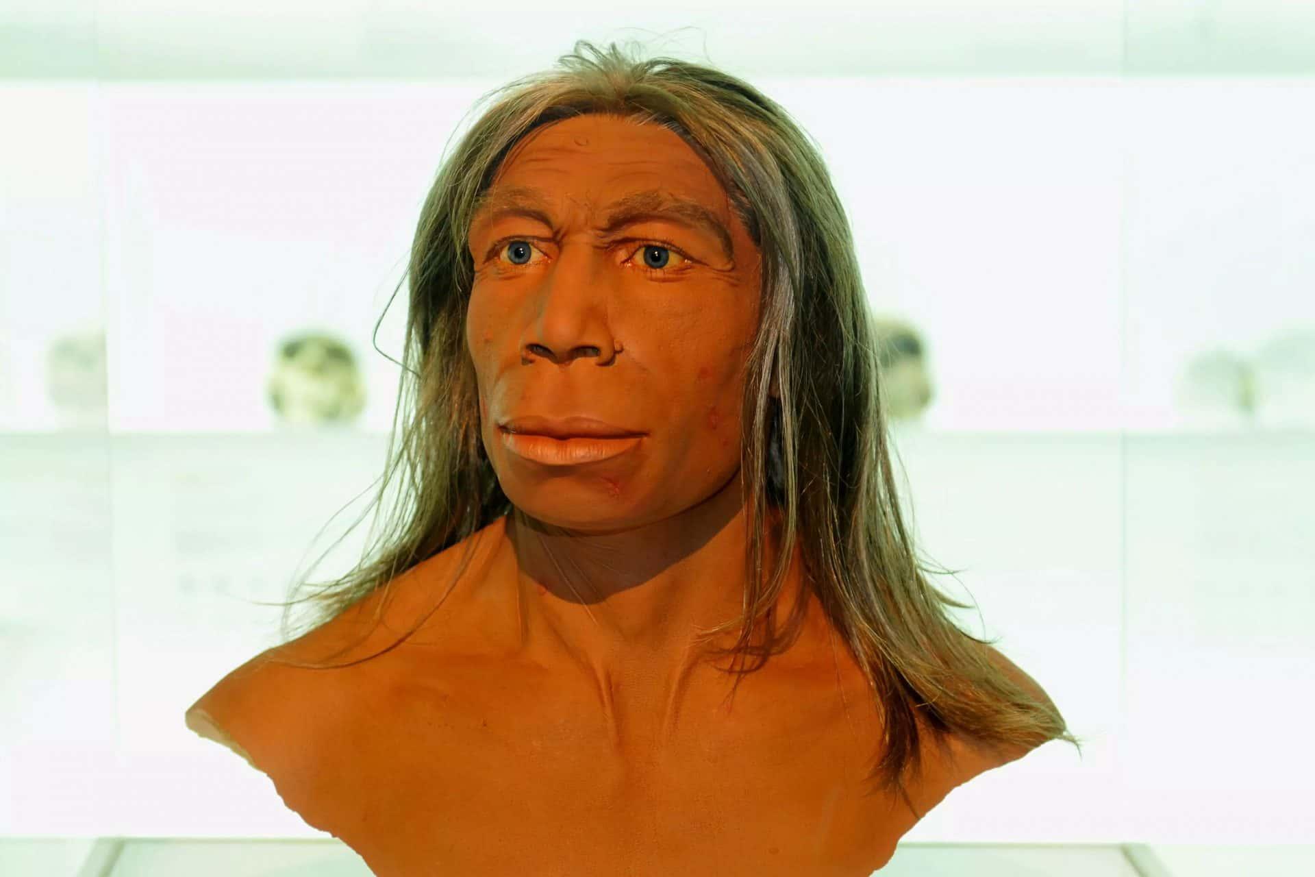 Homo Heidelbergensis