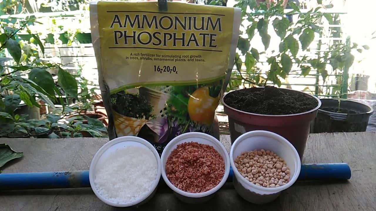 Know More About Fertilizer