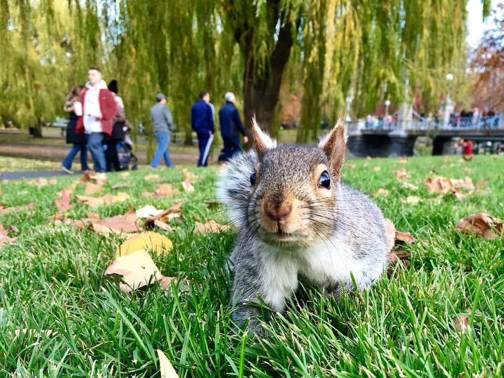 Keep Squirrels Away