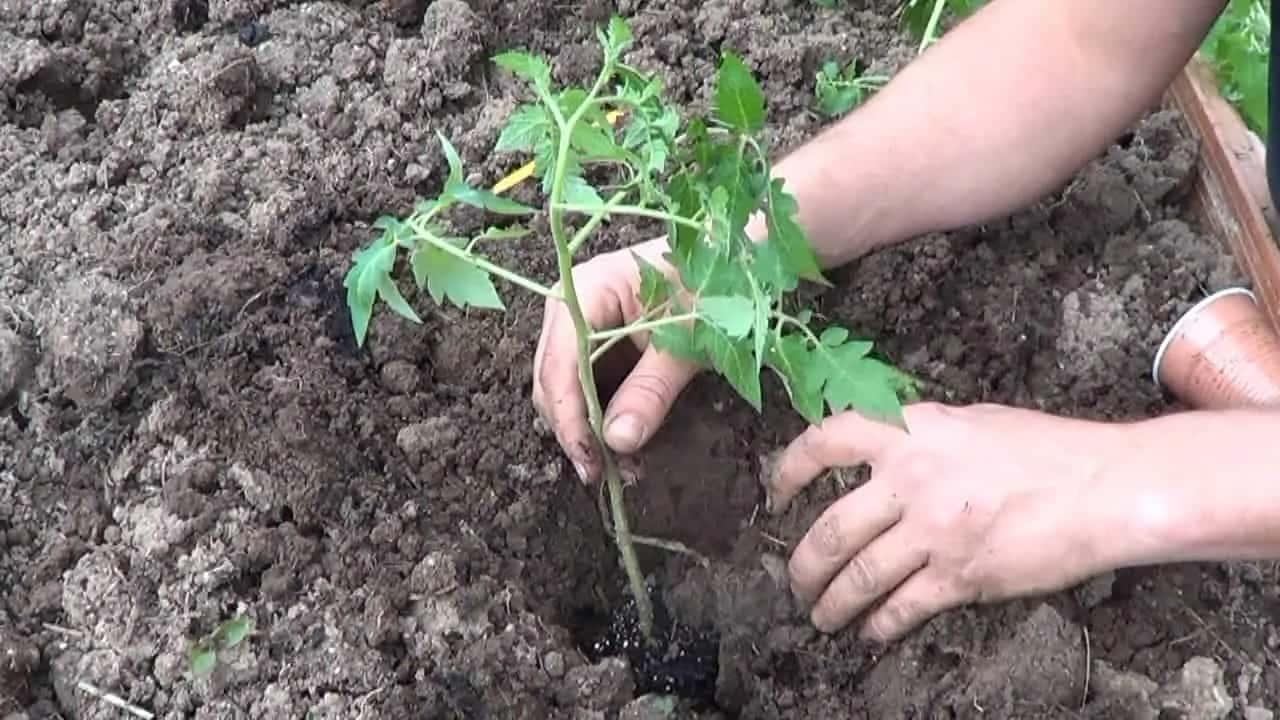 Déménagez Vos Plantes