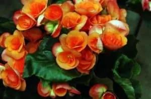 Pour Des Fleurs Saines