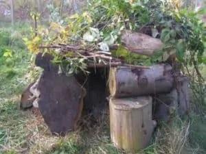 Les Hérissons Protègent Votre Jardin