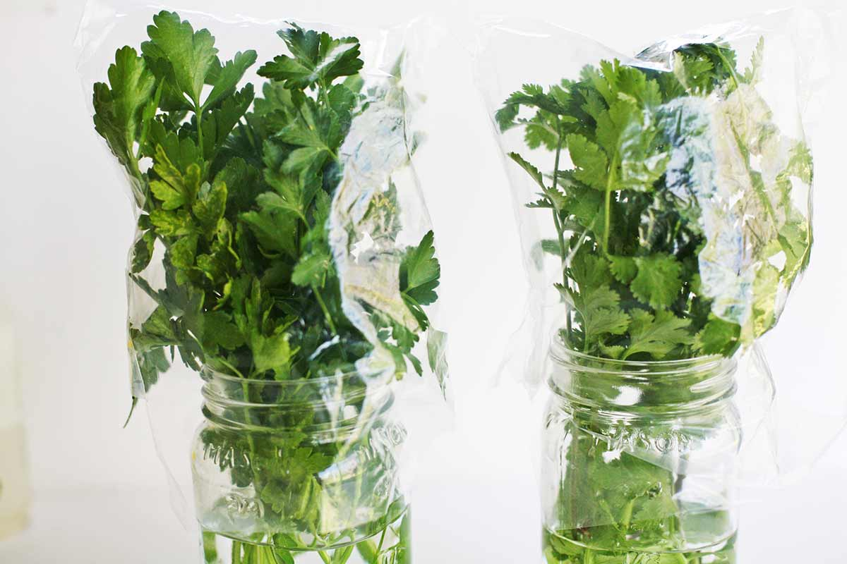 Gardez Vos Herbes Plus Longtemps