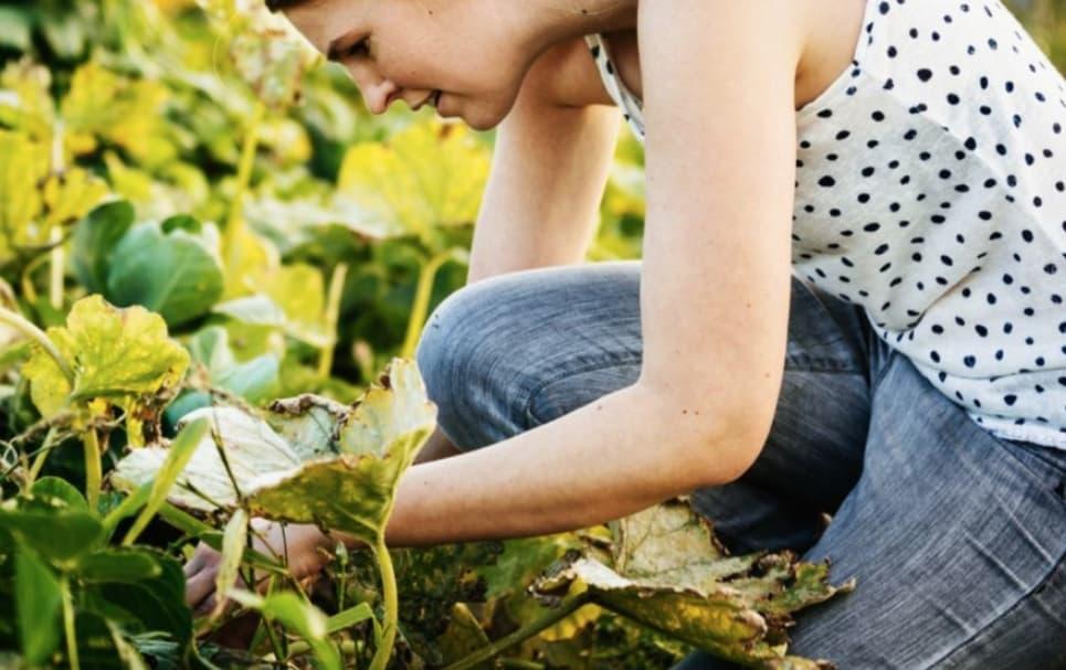 Sigue Estos Maravillosos Consejos Para Que Tu Jardín Sea La Envidia De Todos
