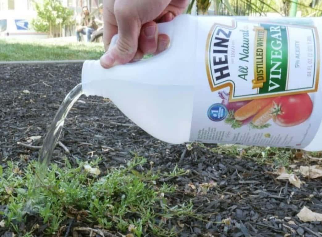 Pesticida Casero Para Las Malas Hierbas
