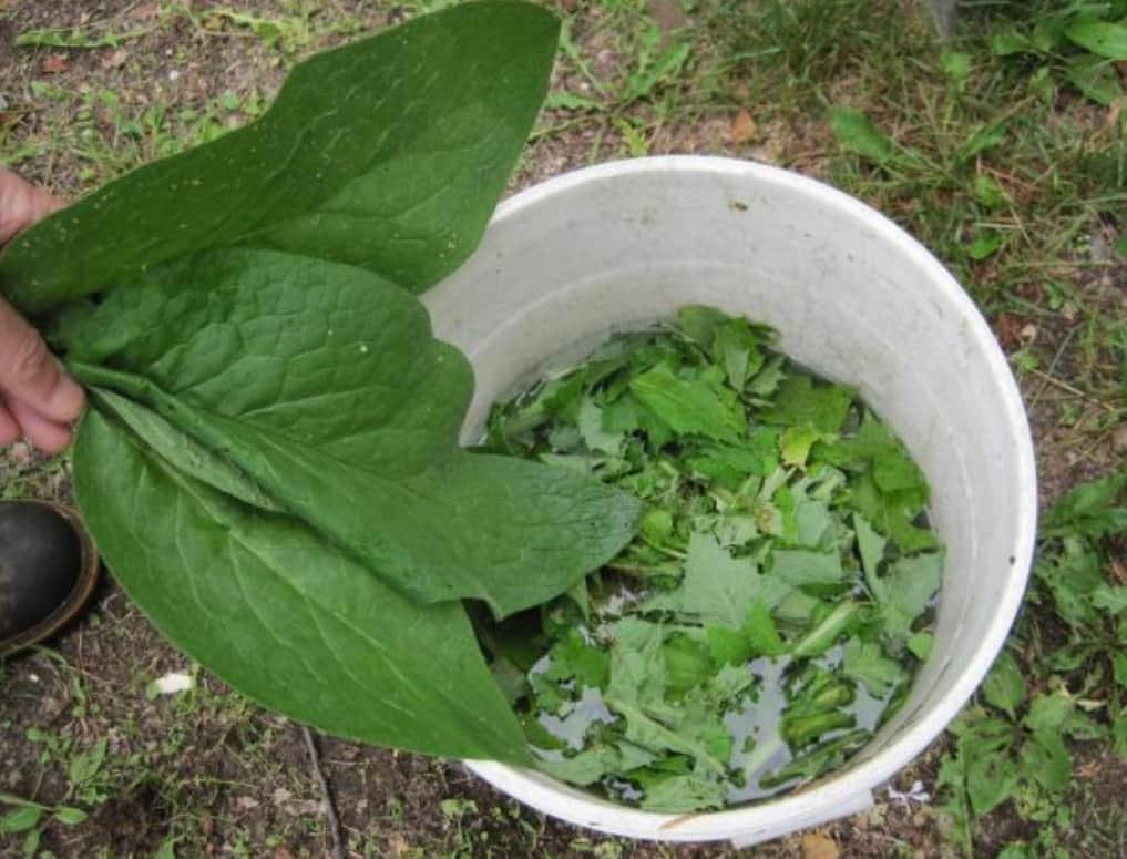 Té Fertilizante De Mala Hierba