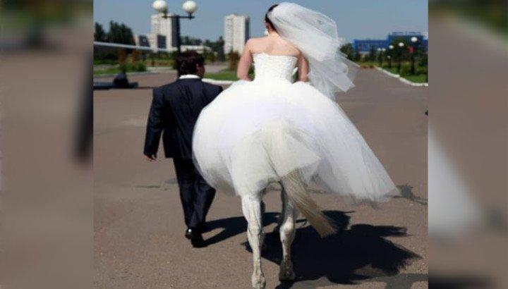 Marrying A Centaur