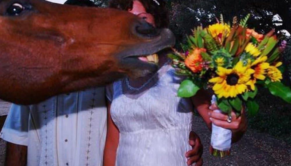 Another Horsey Wedding