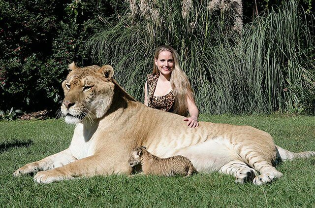 The Largest Living Cat In The World Is Called Hercules