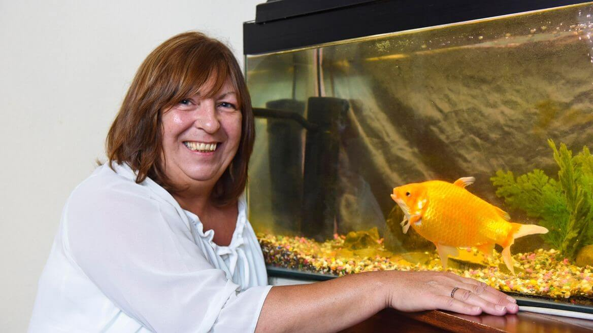 Bob The Goldfish Is Larger Than Life
