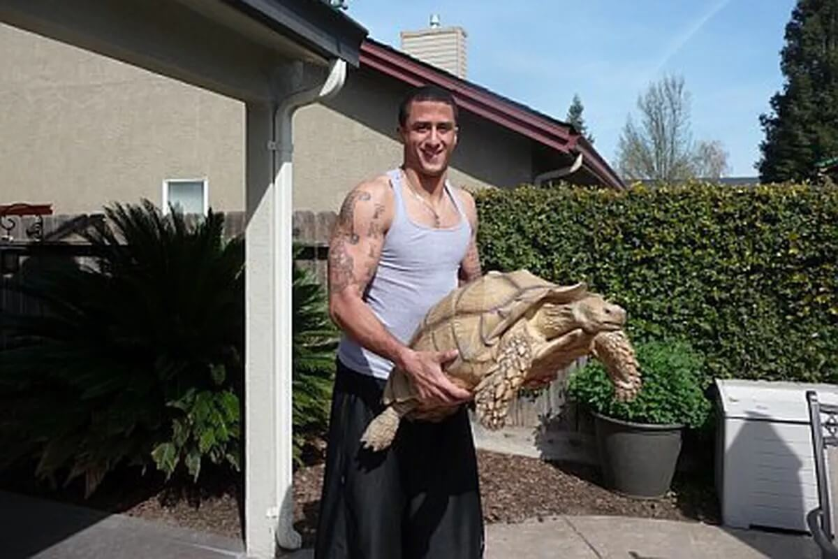 Colin Kapernick And His Giant Pet Tortoise