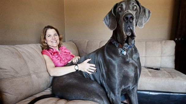Former Runt Of The Litter Now Weighs 245 Pounds