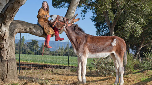 This Donkey Is Nearly Double The Size Of An Average One