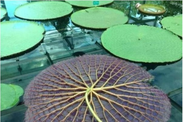 The Otherside Of A Lilypad