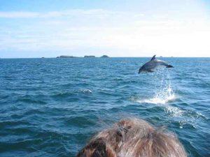Un delfino per la foto pefetta