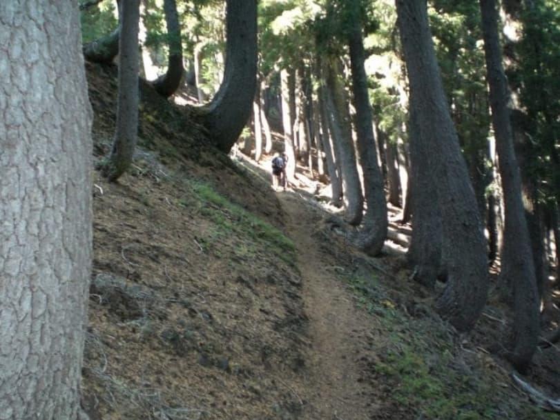 J Förmige Bäume