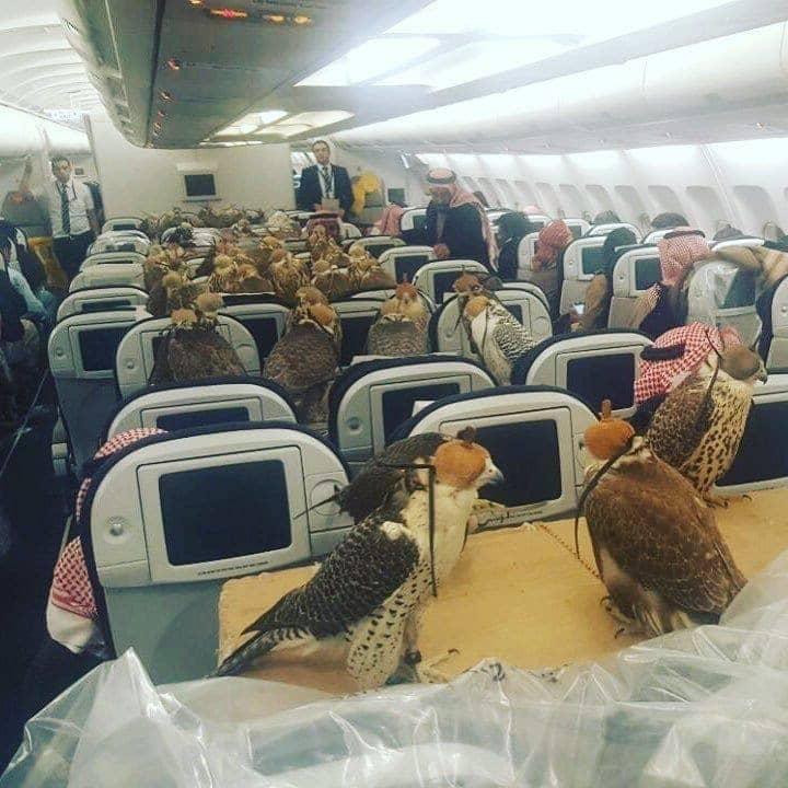 Full Of Falcons