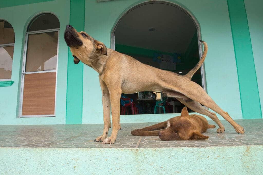 Genau Wie Yoga