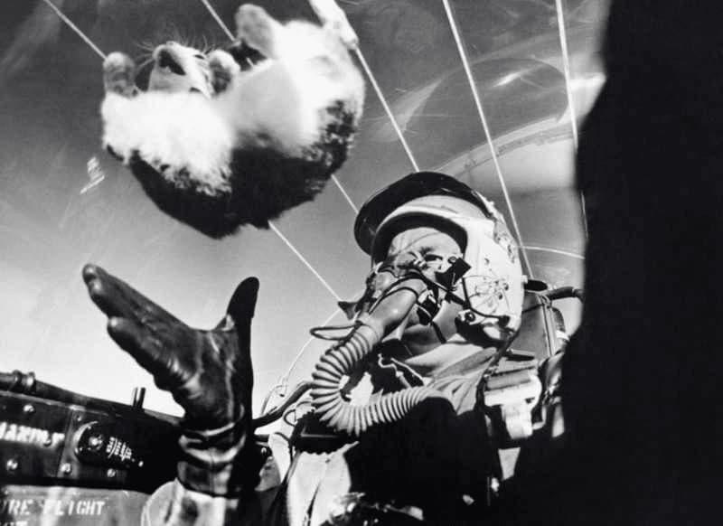A Flying Cat