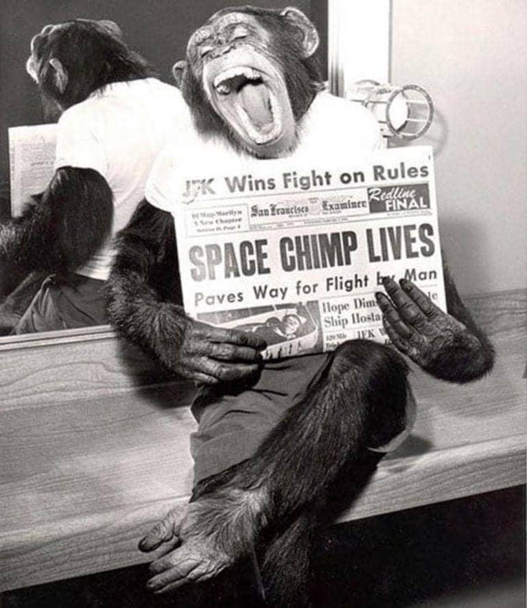 Meet The Astrochimp