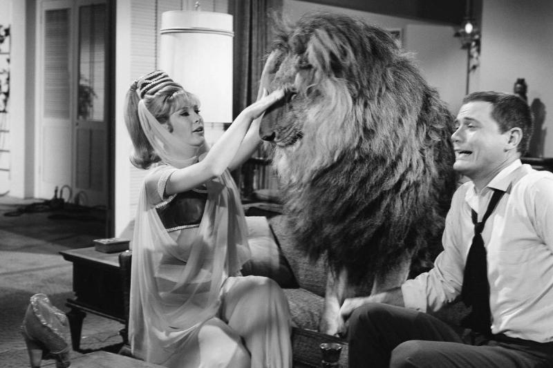 Barbara Eden Got Along With The Lion