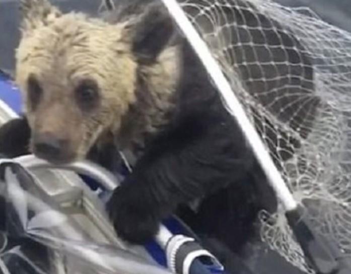 O Primeiro Bebê Urso