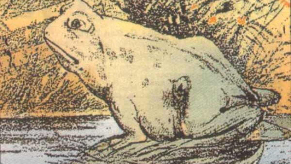 Horse Or Frog