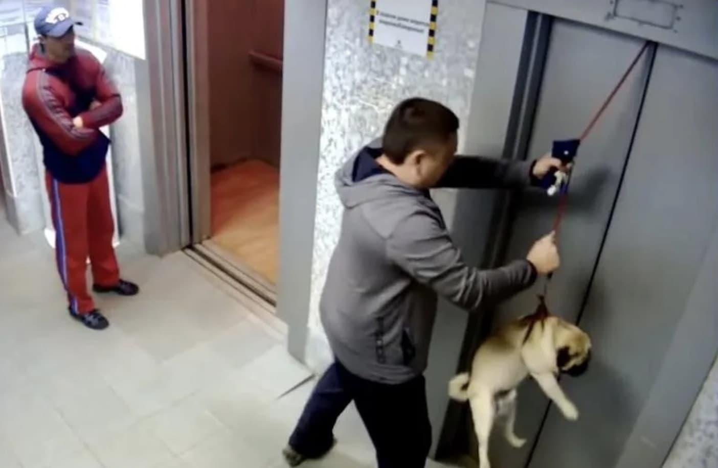 Köpeği Kurtarın