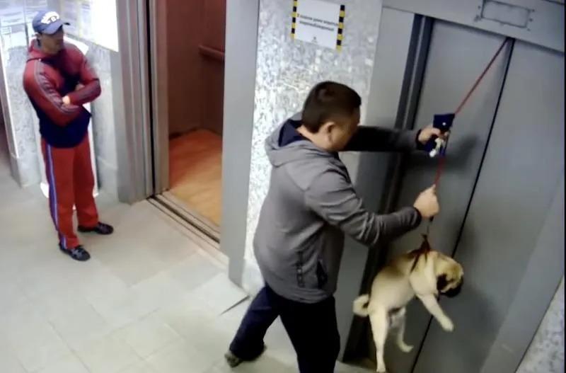 Salve o cachorro