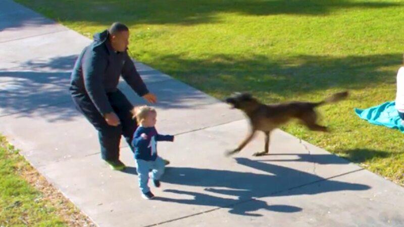 Un Niño De 3 Años Estaba A Punto De Ser Secuestrado Por Un Hombre Extraño, Pero Un Perro Valiente Se Unió Al Acto